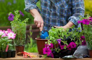 Sefaireaider au jardin, mon Jardin des Quatre Saisons